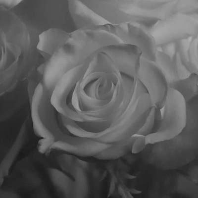 Photograph - A Rose In Infrared by Guy Whiteley