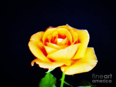 Photograph - A Rose In Peach by Ava Larsen