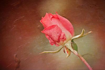 A Rose In The Rain Art Print by Trish Tritz