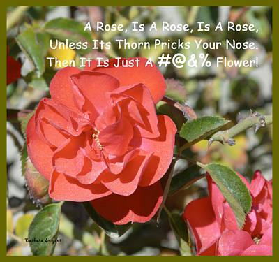 Roses Bushes Digital Art - A Rose Is A Rose by Barbara Snyder