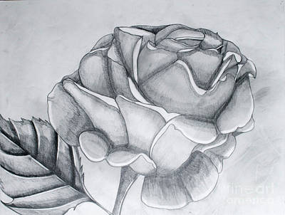Drawing - A Rose Is A Rose by Cecilia Stevens