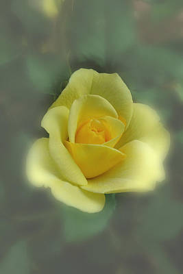 Photograph - A Rose Is A Rose by David Armstrong