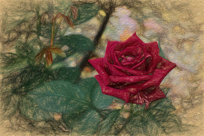 Digital Art - A Rose Is A Rose Is A by Terry Cork