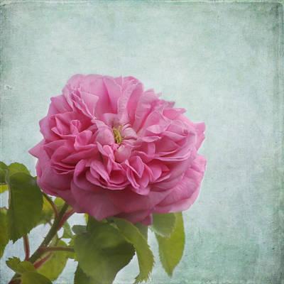 Kim Photograph - A Rose by Kim Hojnacki
