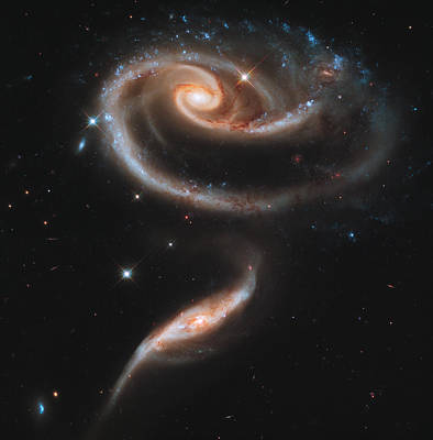 Virgo Photograph - A Rose Made Of Galaxies by Celestial Images