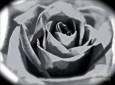 Photograph - A Rose by Terri Thompson