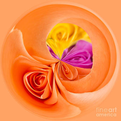 Golden Orb Photograph - A Round Of Roses by Anne Gilbert