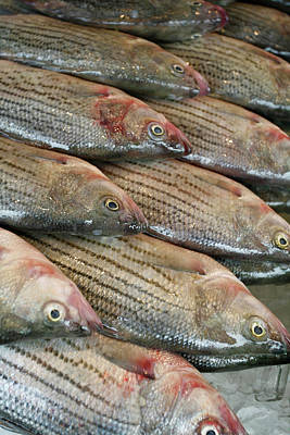 Fishy Photograph - A Row Of Fresh Fish At The Fish Market by Chris Pinchbeck