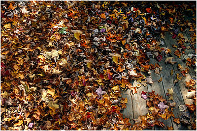 Photograph - A Rustling Of Leaves by Wayne King