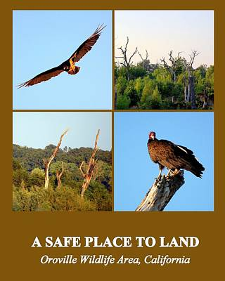 Photograph - A Safe Place To Land by AJ  Schibig