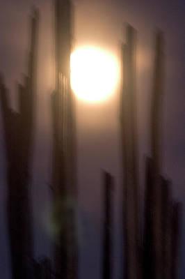 A Saguaro Cactus, Carnegiea Gigantea Art Print by Phil Schermeister
