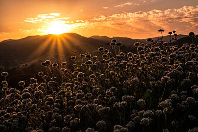 Book Quotes - A Santa Monica Mountains Summer Solstice Sun Sets. by Wasim Muklashy