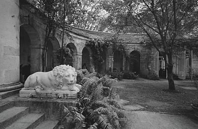 A Sculpture Of A Lion In A Garden Art Print by Patrick Litchfield