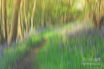 Nature Study Digital Art - A Sea Of Bluebells by Rosie Nixon
