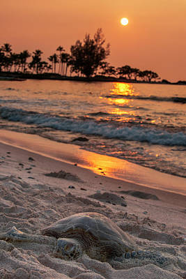 The Sea Of Tranquility Photograph - A Sea Turtle Rests On The Beach by Carl Johnson