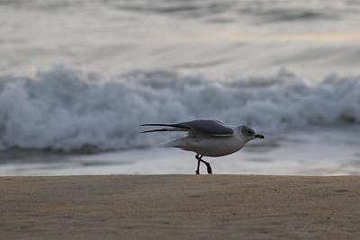 Photograph - A Seagull Take-off by Robert Banach