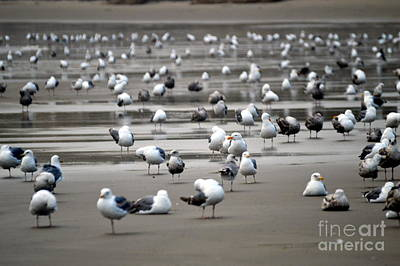 Photograph - A Seagulls Life by Sheldon Blackwell