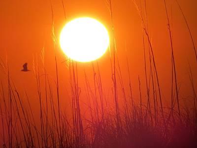 A Seagull's Sunrise Art Print