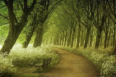 Netherlands Landscape Photograph - A Seat Not Taken by Lars Van De