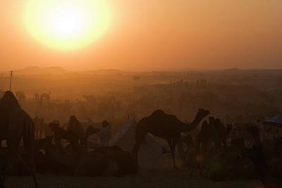 Camel Photograph - A Setting Sun And Silhouetted Camels by Steve Winter
