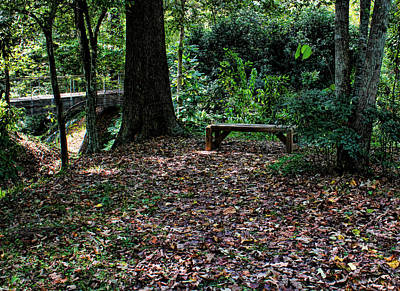 Photograph - A Shady Resting Place by Judy Vincent