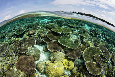 A Shallow Coral Reef Thrives Art Print