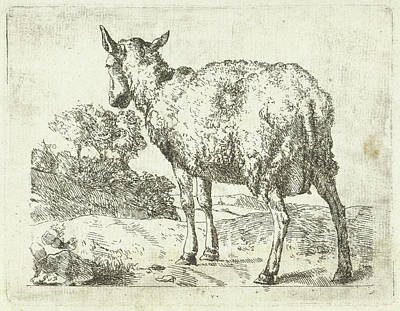 Mirror Drawing - A Sheep, Anonymous, Marcus De Bye by Anonymous And Marcus De Bye