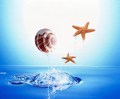 A Shell And Two Starfish Floating Art Print by Panoramic Images