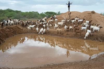 A Sheperd Tending Goats At A Waterhole Art Print by Tony Camacho