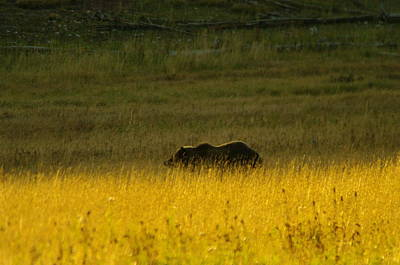 West Yellowstone Photograph - A Silver Back by Jeff Swan