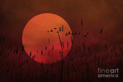 A Simple Sunset In June Art Print by Tom York Images