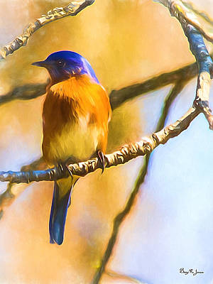 Photograph - Bird - Limb - A Single Bluebird by Barry Jones