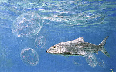 Image Of Jelly Fish Photograph - A Single Bonefish Glides Among by Stanley Meltzoff / Silverfish Press