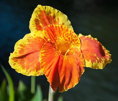 Lilium Bulbiferum Photograph - A Single Orange Lily by Jill Mitchell