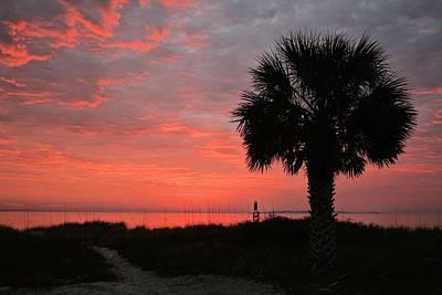 A Single Palm Florida Sunrise Art Print by JC Findley