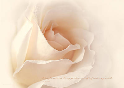 Photograph - A Single Peach Rose Quote by Jennie Marie Schell