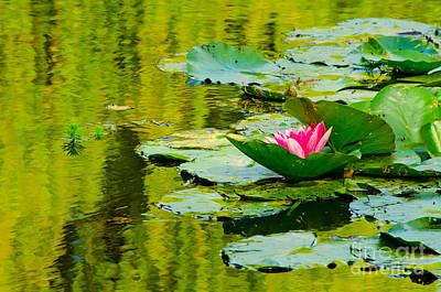 Photograph - A Single Pink Water Lily From Giverny by MaryJane Armstrong