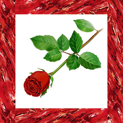 A Single Rose Burgundy Red Art Print