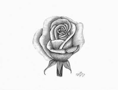 Drawing - A Single Rose by Patricia Hiltz