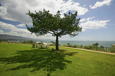 A Single Windblown Tree Growing Art Print