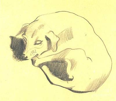 Simplicity Drawing - A Sketch Of A Dog Enjoying A Nap by Makarand Joshi