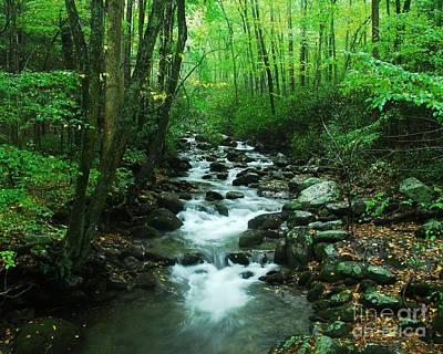 Photograph - A Smoky Mountain Stream 1 by Mel Steinhauer