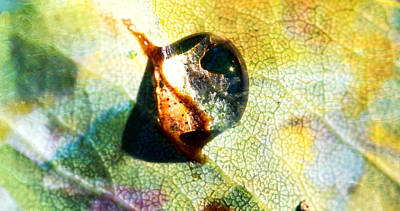 Photograph - A Snail Of A Droplet - Water Drop - Snail by Marie Jamieson
