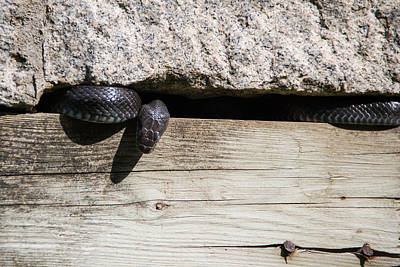 Photograph - A Snake Among The Ruins by Kathi Isserman