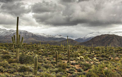 Photograph - A Snow Day In The Sonoran Desert  by Saija  Lehtonen