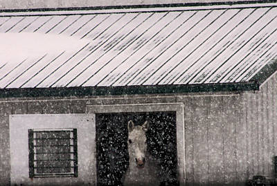 A Snowfall At The Stable Art Print