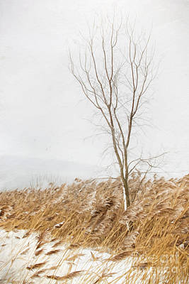 Photograph - A Snowy Winter Country Scene/ Digital Painting by Sandra Cunningham