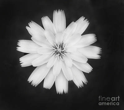 Photograph - A Soft Flower by Donna Greene