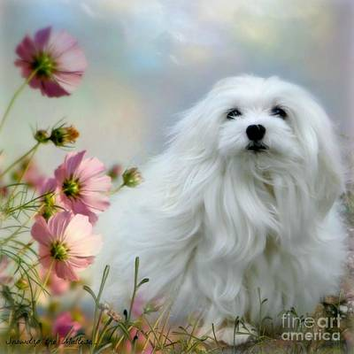 Maltese Dog Photograph - A Soft Summer Breeze by Morag Bates