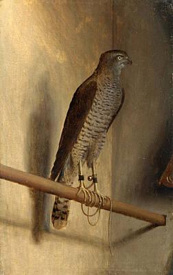 Sparrowhawk Painting - A Sparrowhawk by Jacopo de' Barbari